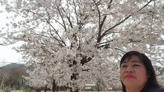 Katuwaan sa buhay ni Lilibeth Hong South Korea