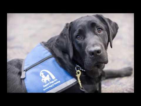 Assistance Dog Visits FBI St. Louis