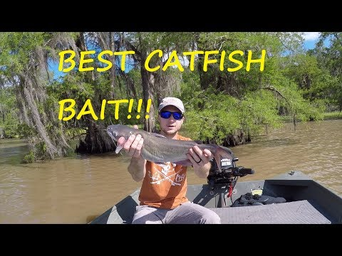 What Is The Best Catfish Bait?!?! - Limb Lining For Catfish
