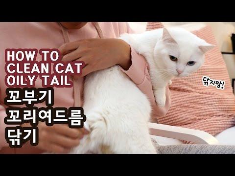 꼬부기 꼬드름 닦기 (꼬리에 나는 고양이 여드름) CLEAN CAT S OILY TAIL