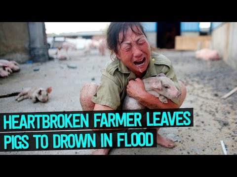 Heartbroken Chinese Farmers Forced To Leave Their Pigs To Drown In Flood