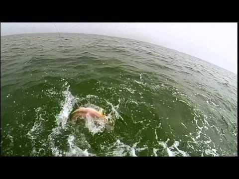 Capt scot abendschan bull red fishing fort morgan al youtube for Fort morgan fishing charters