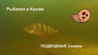 Рыбалка в Кушве - Заглянем Под Лед !