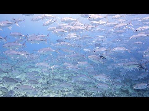 Palau underwater (UHD, 4K)