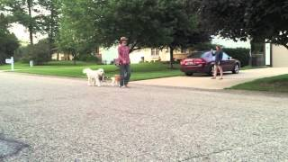 Lady's First Day Doing The Structured Walk | Follow The Leader Dog Training And Rehabilitation Llc