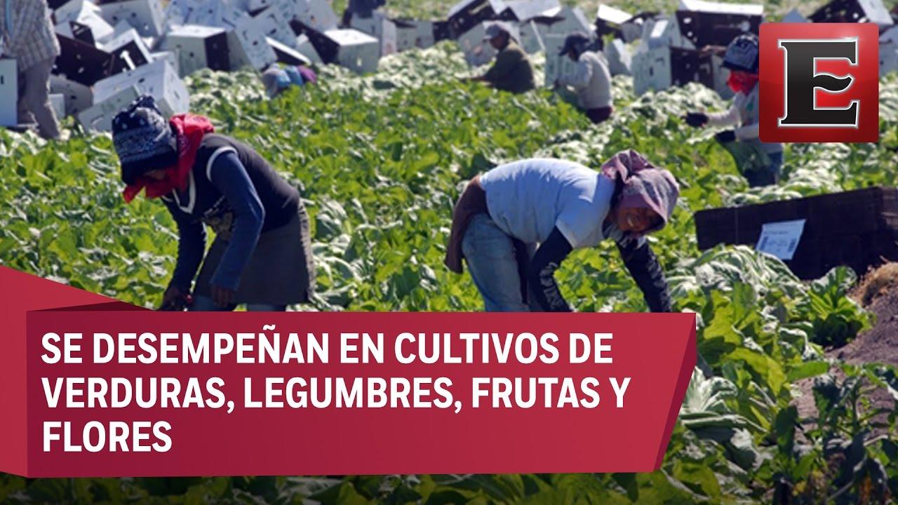 Jornaleros Mexicanos Viajaran A Canada Para Trabajar En El Campo