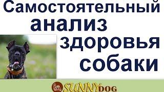 как анализировать собаку для дог фитинеса анализ здоровья собаки