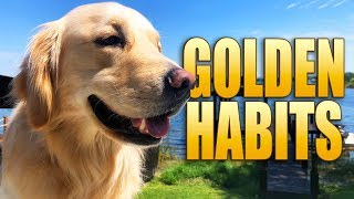 Weird Golden Retriever Habits