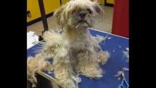 get your pets groomed regularly this is why
