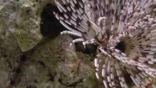 Как едят морские рыбки. Что едят морские рыбки. Мой морской аквариум.