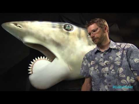 Bailey Stead's Discovery Channel and Digital Media Demo Reel