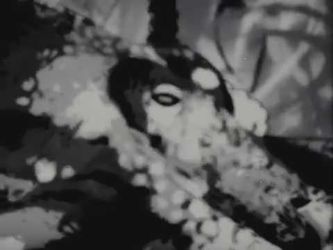_massive attack - paradise circus (mija remix) [visual loop]