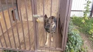 Строительство и особенности  будки для собаки - Немецкая овчарка.