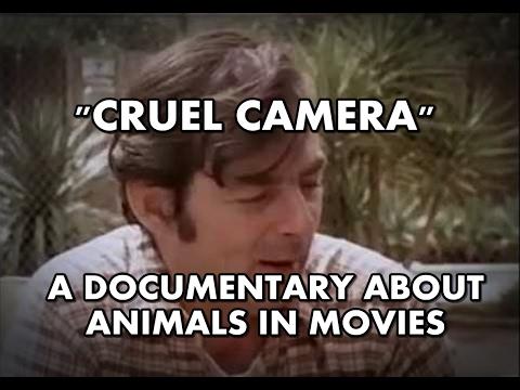 Cruel Camera - Animals in Movies | Full documentary