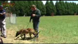 Dog Training- Socialisation And Obedience Www.sidneyaarons.com.au