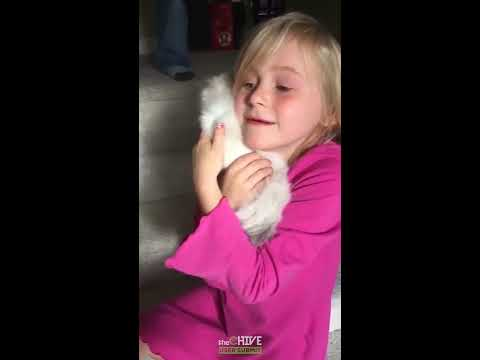 Little girl has an adorable reaction to her new surprise kitten
