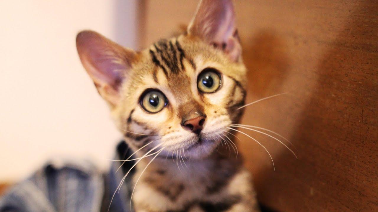 Benji The Cat [kitten Montage!]  Youtube