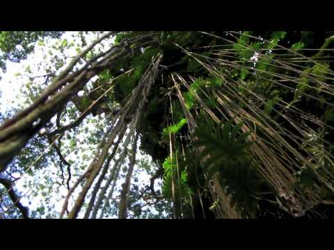 Big Island Hawaii. Part 42. Around Puna.