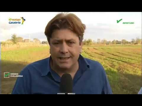 InfoStudio il telegiornale della Calabria notizie e approfondimenti - 22 Gennaio 2020 ore 19.15