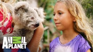 La encantadora de koalas | The Dodo: En busca de héroes  | Animal Planet