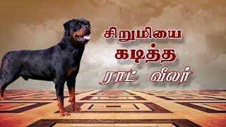 சிறுமியை கடித்துக் குதறிய ராட் வீலர் ..!   #RottweilerDog   #Chennai