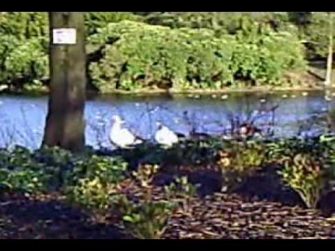 corporation park , blackburn uk