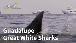 2018 Guadalupe Great White Sharks