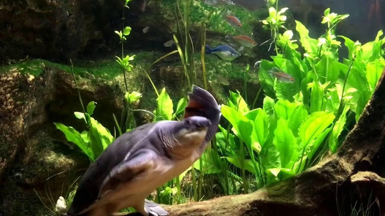 Dallas World Aquarium March 2016 Youtube
