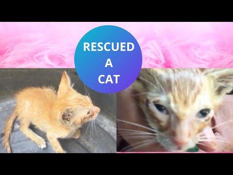 Miming | Rescued a cat | Ponkx Kalbx