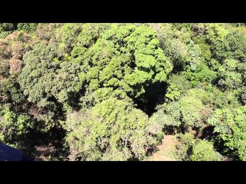 Aerial Tree Mapping
