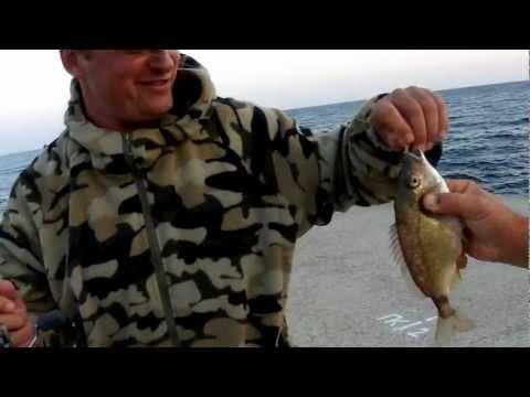 ласкирь черноморский как ловить