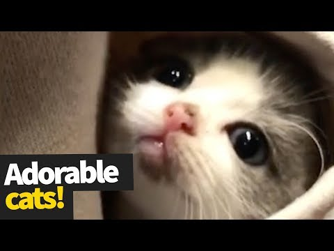 Cute Cat Moments Caught on Camara 2019 | Cats are Awesome