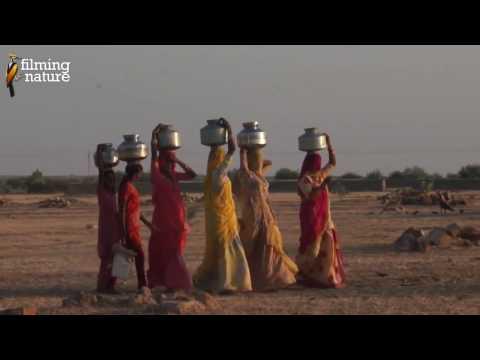 Desert Documentary HD - BIRDS OF THE INDIAN THAR DESERT