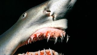 10 Disgusting Animal Facts