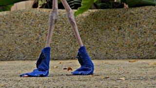 Фламинго в синих ботиночках – удивительное зрелище в сингапурском парке птиц (новости)