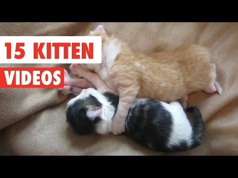 15 Funny Kitten Videos Compilation 2016