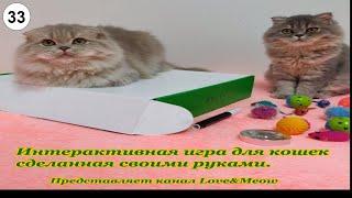 Интерактивная игра для кошек сделанная своими руками #Кошки #Коты #Котята #Прикольные #Веселые
