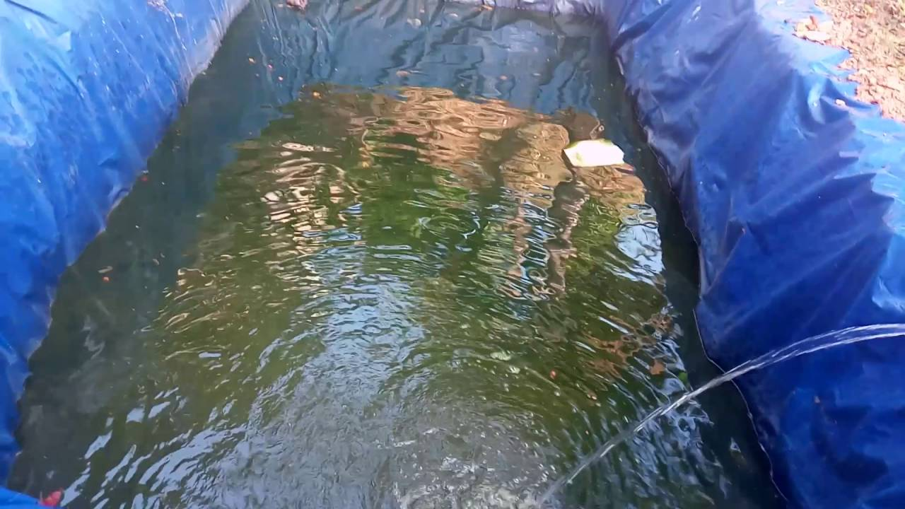 Fish farming in tarpoulin sheet youtube for Tarpaulin fish pond