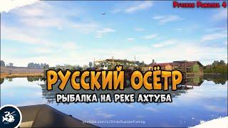 Осётр Русский Рыбалка на реке Ахтуба Driler Русская Рыбалка 4