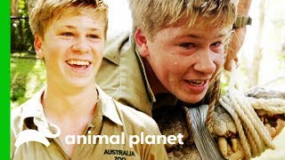 Robert Irwin HeadJumps His Biggest Croc Ever! | Crikey! It's The Irwins