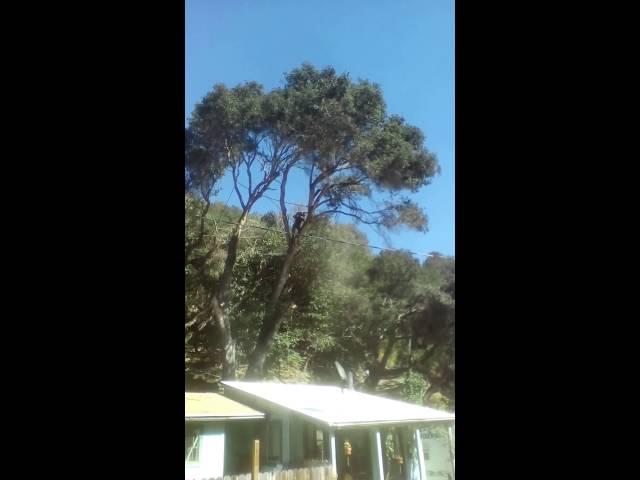 Arborist Mount Pleasant SC
