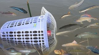 Creative Girl Make Fish Trap Using Plastic Bottle - Fan Guard -  Basket To Catch A Lot of Fish