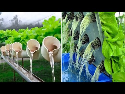 Awesome Hydroponic Farming Modern Technology   Aquaponics Agriculture - Vertical Farming