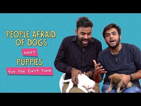 People Afraid Of Dogs Meet Puppies For The First Time | Ok Tested
