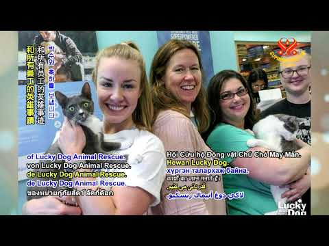 Shining World Hero Award: Lucky Dog Animal Rescue - Português