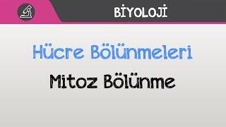 hcre-blnmeleri-mitoz-blnme