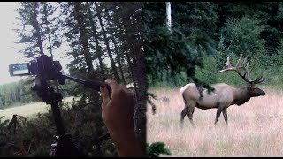 ARCHERY ELK KILL SHOT, HEAD CAM VS TRIPOD CAM