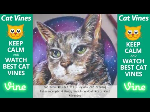 Ultimate Cat Vines Compilation #4 - October 2015