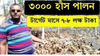 স্বপ্ন নয় বাস্তব - ৩০০০ হাঁস পালন করে মাসে আসবে ৬-৭ লক্ষ টাকা   রাব্বী হ্যাচারী   Duck Farming in BD