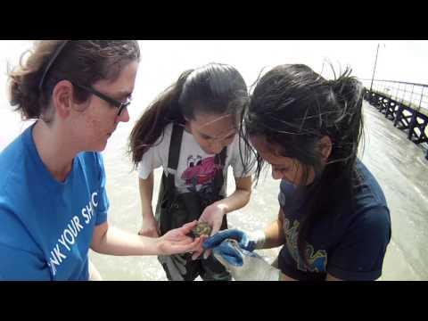 Ocean Ecosystem Services